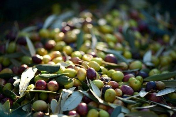 Mezcla de olivas negras y verdes