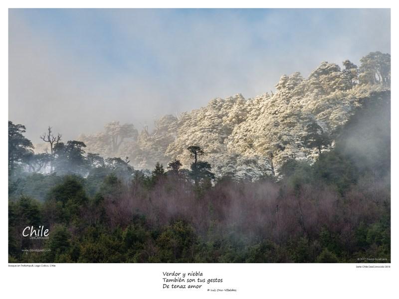 Bosque en Trafampulli, Lago Collico, Chile by David Gysel Lenk.
