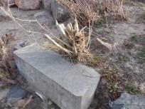 2013-12-19-cottonwood-after-beavers