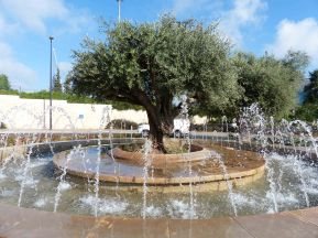 olive-and-fountain-in-traffic-circle-west-jerusalem