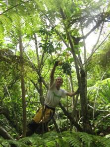Jean-Yves picks wild oranges, Fatu Iva, Marquesas Islands, 2007