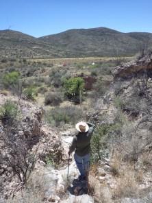 Jesús botanizes in the Mule Mountains, Arizona. April 2017