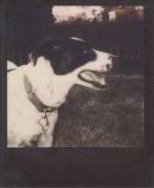 Zed the Dog