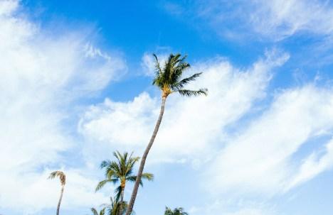 maui_hawaii_palm_tree_sky