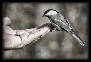 Trusting Bird - Pro-Zak