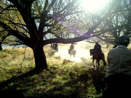 Horse Riders Silhouetted in sun beneath limbs of a tree - Glenorchy - New Zealand