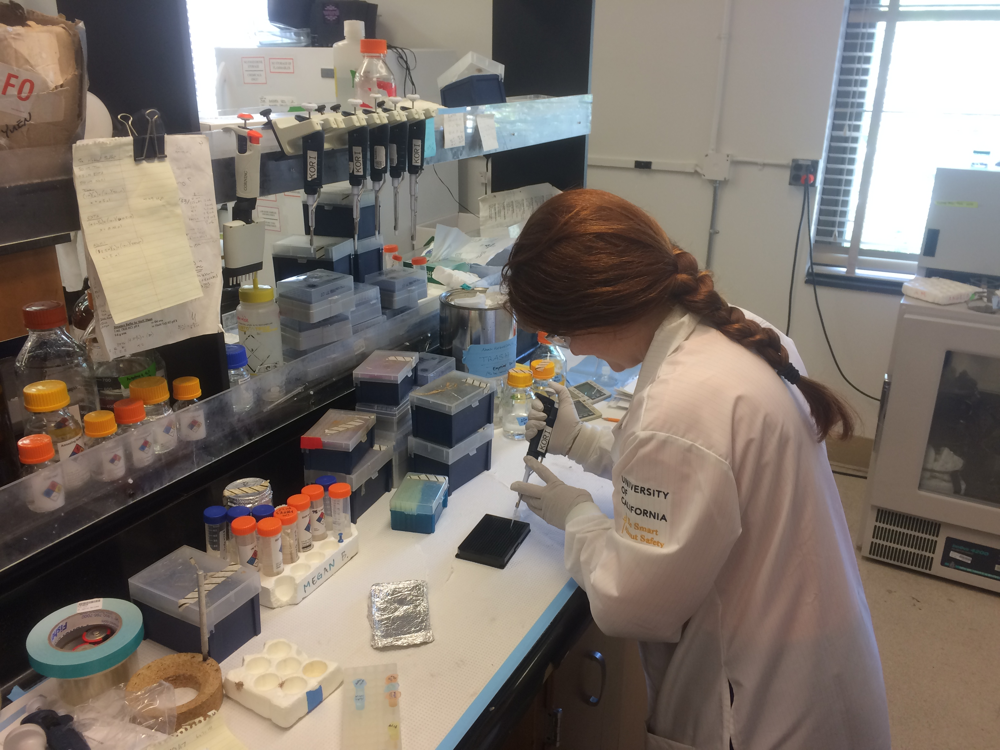 Kori prepares a fluorescence-based enzyme activity assay