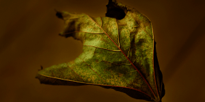 Rising Leaf Fall Photograph by David McCammon