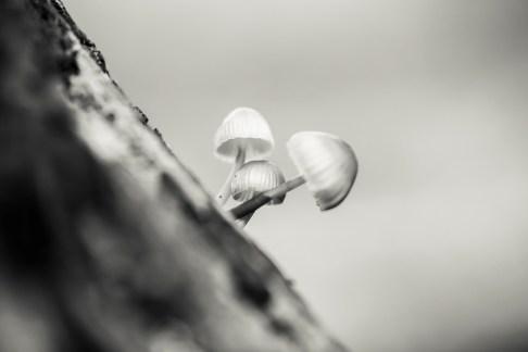 © David Mella