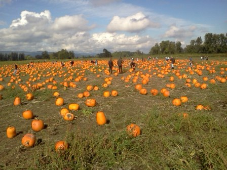 The Pumpkin Patch on Sauvie Island