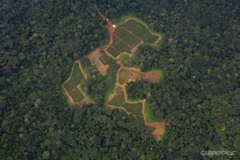 Forest Clearing in Cameroon, and example of man's imbalance with nature? Photo credits:  © Greenpeace / Alex Yallop