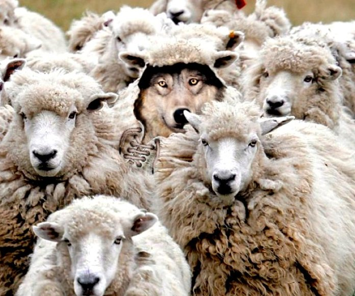 Wolf In Sheep S Clothing David M Masters