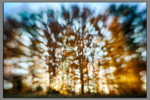 Fall Tree Line