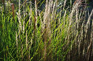 David Moulton Toronto Psychotherapist   Picture of Grasses