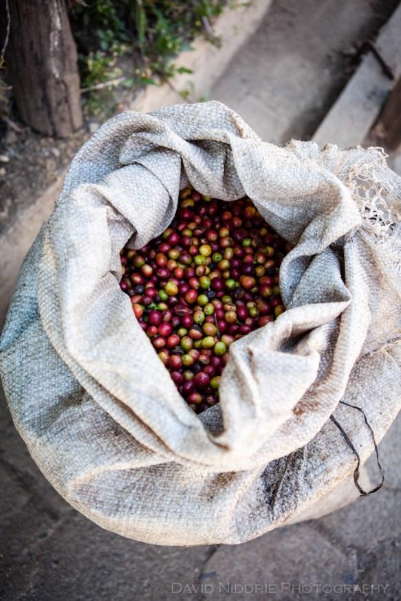 davidniddrie_guatemala_coffee-5986