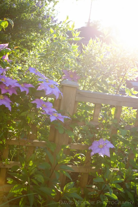 davidniddrie_woodlandgarden-june-6222