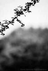 davidniddrie_woodlandgarden-autumn-2875