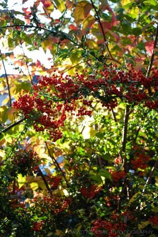 davidniddrie_woodlandgarden_autumn-9791