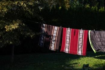 davidniddrie_woodlandgarden_autumn-9800