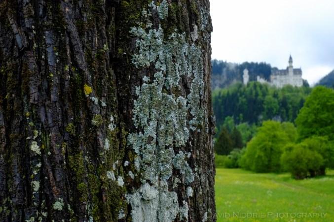 davidniddrie_bavaria-4310