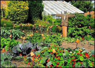 Scarecrow-and-Cabbages