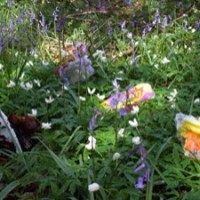 Spring - Take Rubbish Home