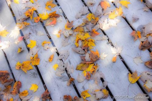Leaves on dock