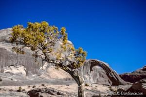 VanLife Tree desert arch