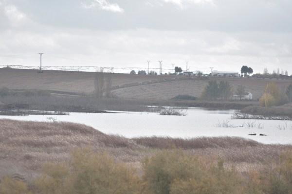 La sobreexplotación del agua subterránea condiciona el equilibrio de Las Tablas de Daimiel