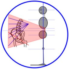 Structural Alignment & Lumbar-Pelvis Illustration for Precise Yoga Therapy & Bodywork