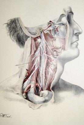 illustration of nerves and muscles - Doctor Sarno Back Pain Relief with Joe Polish