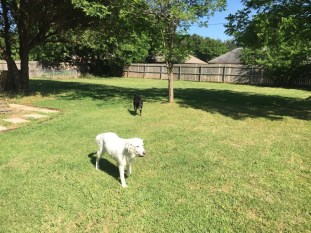 Backyard with fresh grass + our dogs!
