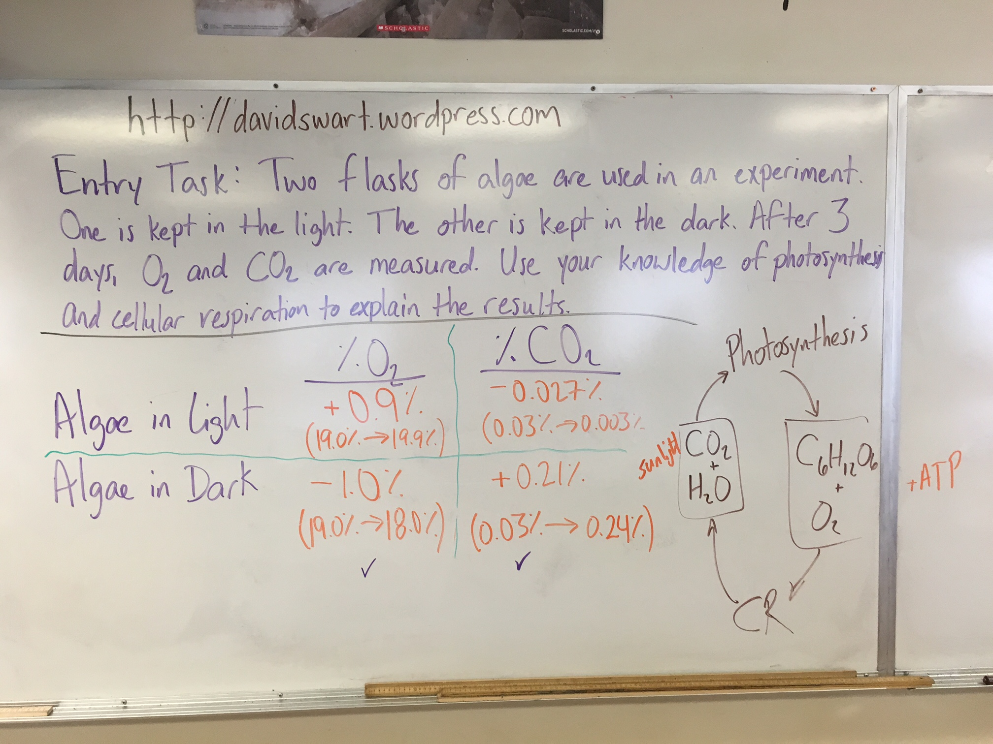 Energy Matter And Organization Photosynthesis
