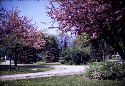 Nature - Hoppa Trees - Spring - Hutch
