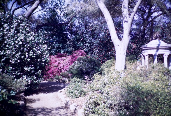 Huntington Library and Art Gallery - Azalea Gardens