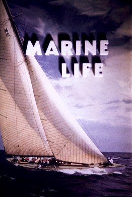 Title Cards - Marine Life