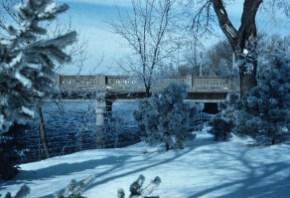 Winter - Frosty Trees