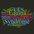 Happy New Year to Cauda Equina Syndrome Sufferers!