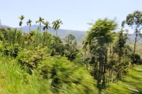Train Kandy to Nuwara Eliya-23