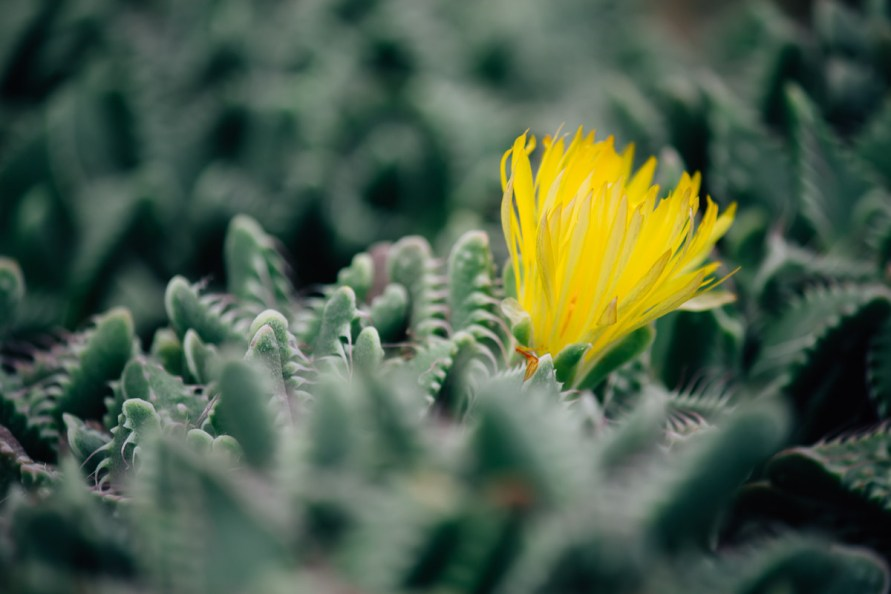 cactus plant with yellow blossom