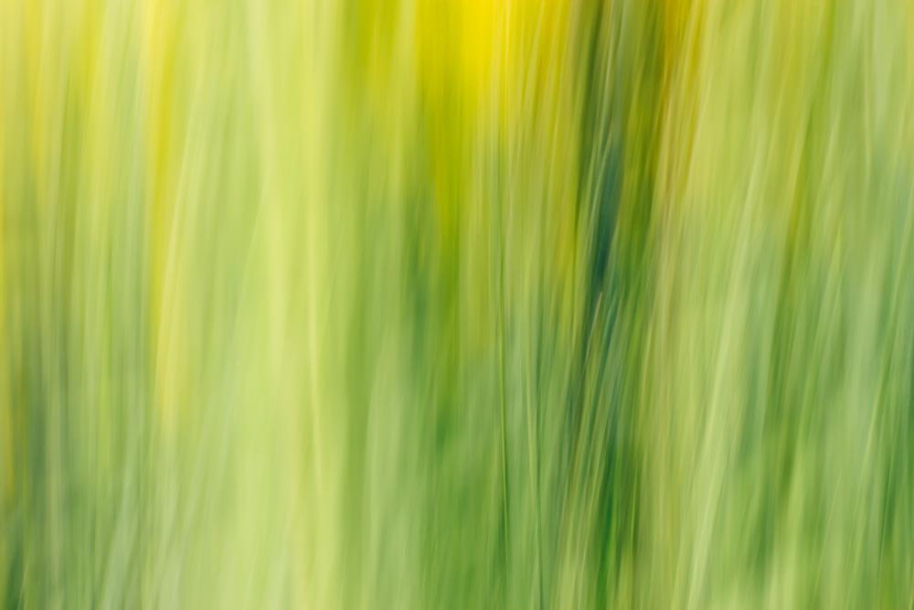 Abstraktes Bild von Goldrutenstielen in Schattierungen aus grün und gelb