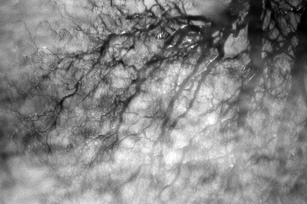 Spiegelung einer Korkenzieherweide in einer Pfütze