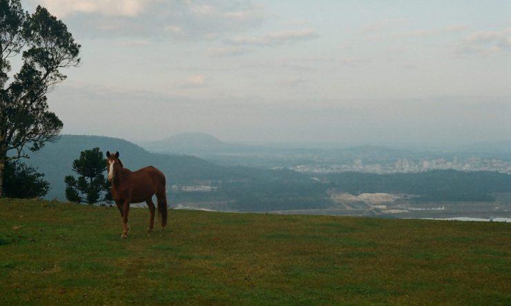 Cavalo da Montanha - davipinheiro.com