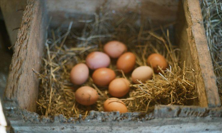 Ovos - davipinheiro.com