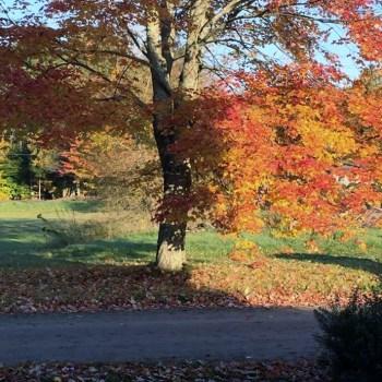 30 Days of Thankfulness, Day #4, Daylight Savings