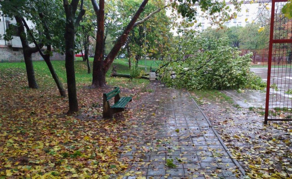 fallen tree on the road