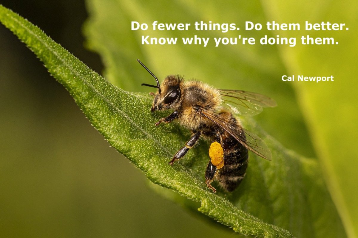 A bee and a quote