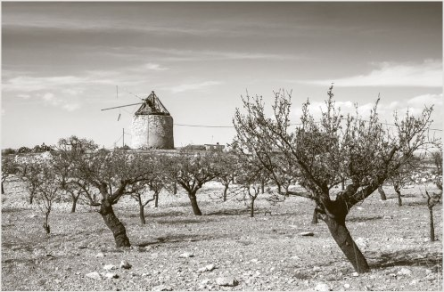 old-spanish-windmill