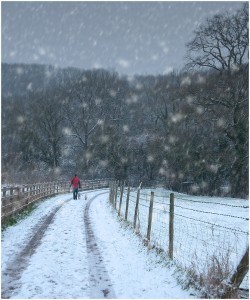 falling-snow1