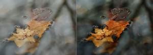 floating-leaves-banner